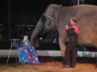 Rakad av en elefant på cirkus i Dusseldorf, Tyskland 2005